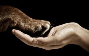 animal-and-human-480x307