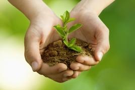 germoglio-pianta-mano-ambiente-natura-ecologia-by-carballo-fotolia-750x500 (1)