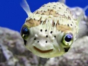 pesce-palla_O2
