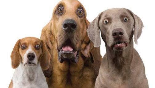 surprised-dog-trio1