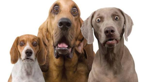 surprised-dog-trio1