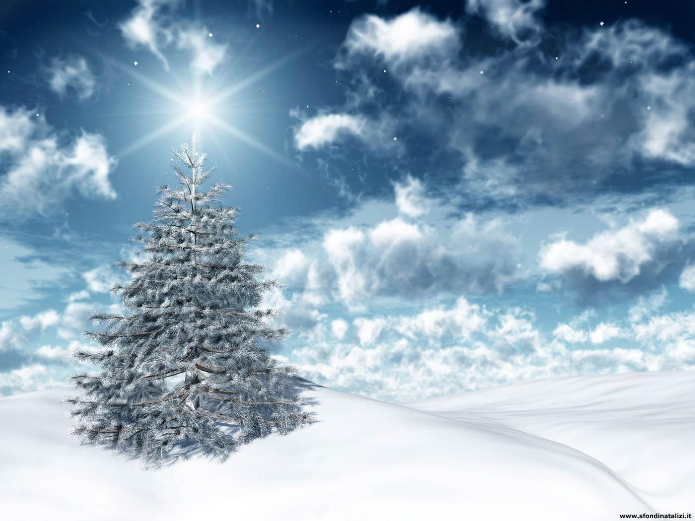 Immagini Di Natale Per Sfondi Desktop.Sfondi Desktop Albero Di Natale Controluce