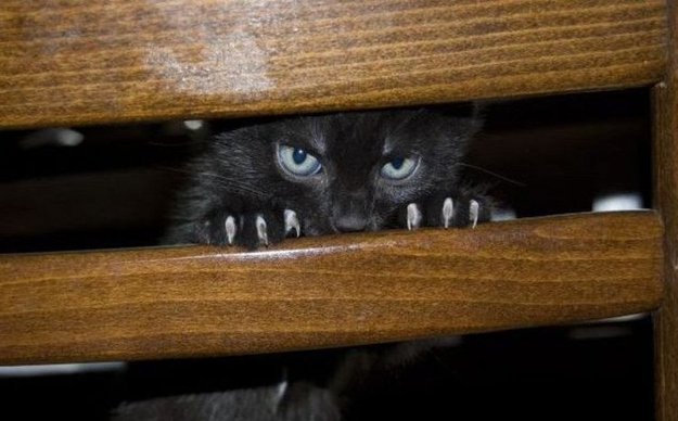 gatti-spie-motivi6